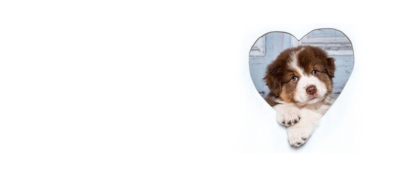 Pets N Pals Staunton, Virginia Pet Store - Buy Puppies, Pets