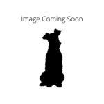 Pets N Pals Staunton, VA Redbone Coonhound