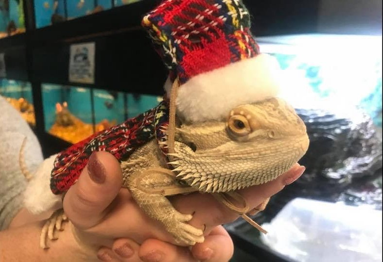 Reptiles Available For Sale - Pets N Pals - Staunton, Virginia